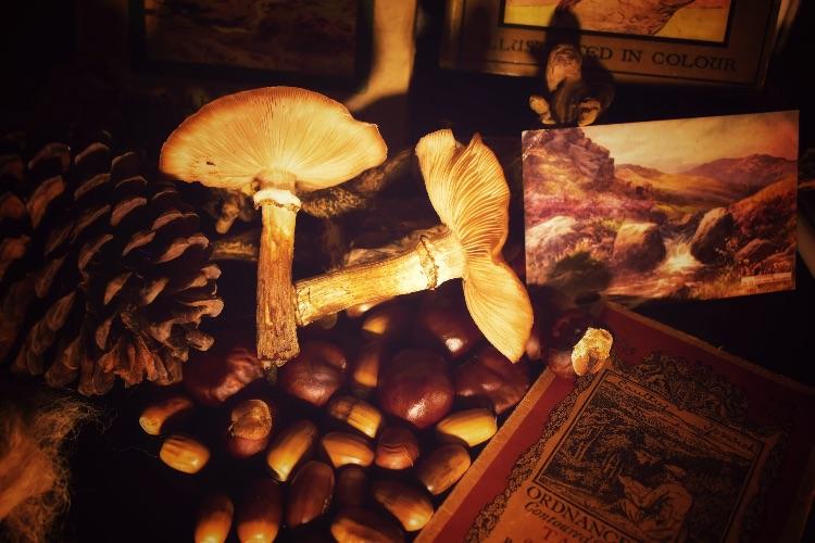 Fungi and conker stilllife October 2018