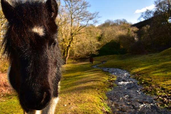 pony, Magpie Bridge, March 2918