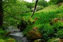 The Meavy river, near Norwsorthy Bridge, in Spring.