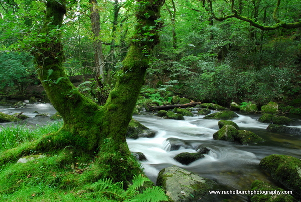 River Plym Shaugh Prior Dartmoor