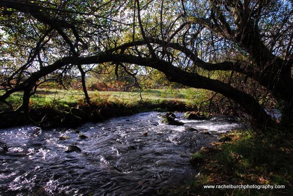 Autumn afternoon at Huckworthy West Devon