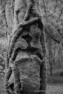 Mossy Trunk at Grenofen Woods Devon