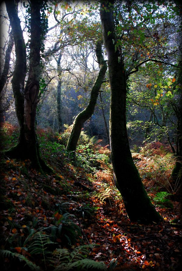 Grenofen Woods Devon in Autumn 2012