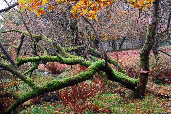 Autumn in the Walkham Valley Devon