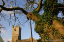 The church of St Peter and the ancient oak Meavy Devon.
