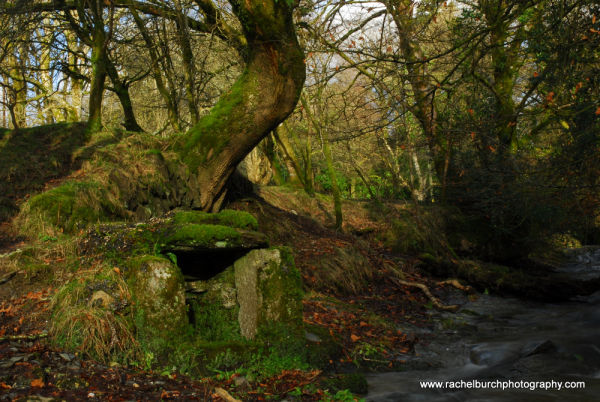 Well near Middlemoor Whitchurch Dartmoor
