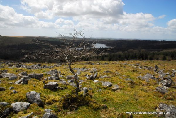 Hawthorn and Burrator reservoir from Peek Hill Dartmoor