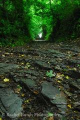 Sunken lane near Middlemoor Dartmoor