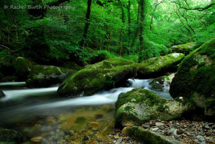 River Plym, Plym Valley Dartmoor.