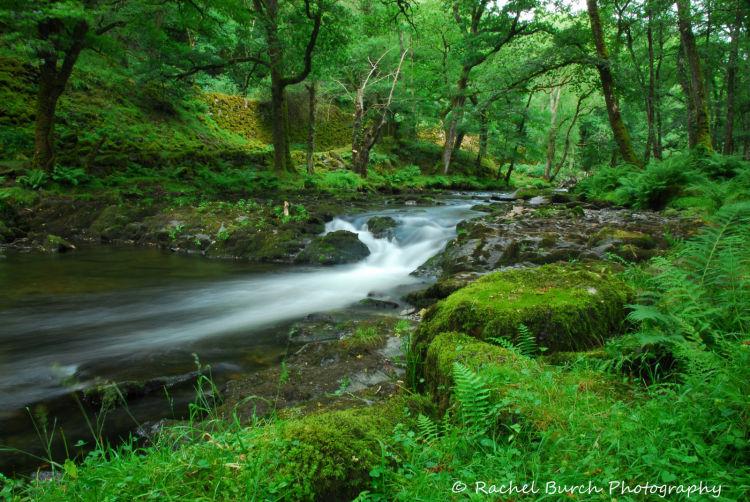 River Walkham Grenofen Woods West Devon