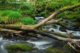 River Meavy Near Burrator Dartmoor