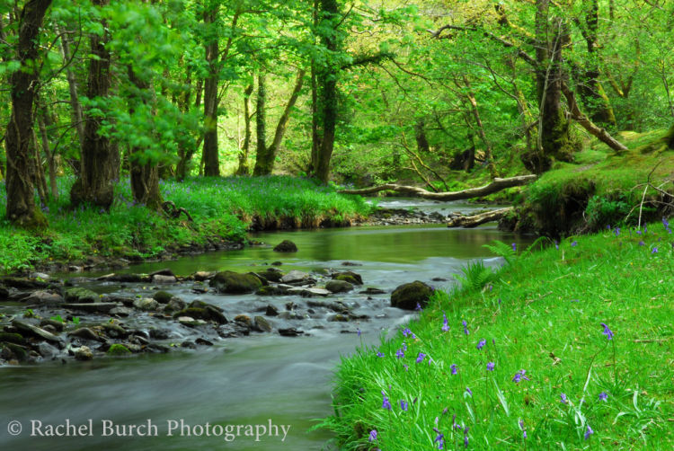 Walkham Valley in Spring West Devon