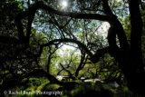 Willows overlooking the East Dart Dartmoor