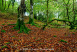 Beeches at Magpie Bridge West Devon