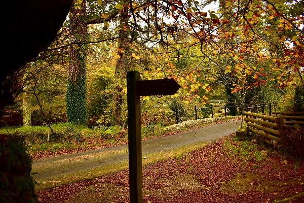 Lane near Creason woods,October 2017