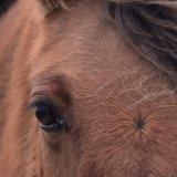 Pony, December 2016