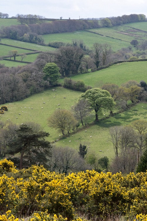 View near Brentor April 2017