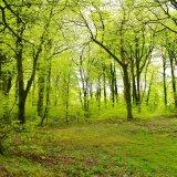 Beech wood near Plasterdown May 2017