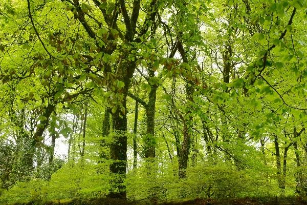 May woodland, Plasterdown Dartmoor 2017
