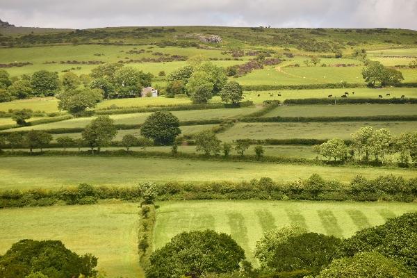 Moorland fields near pew tor June 2017
