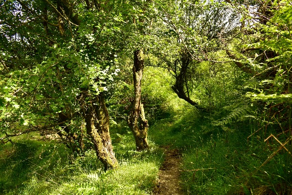 Moorland path near Whitchurch down July 2017