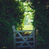 Gate in fields near Tavistock