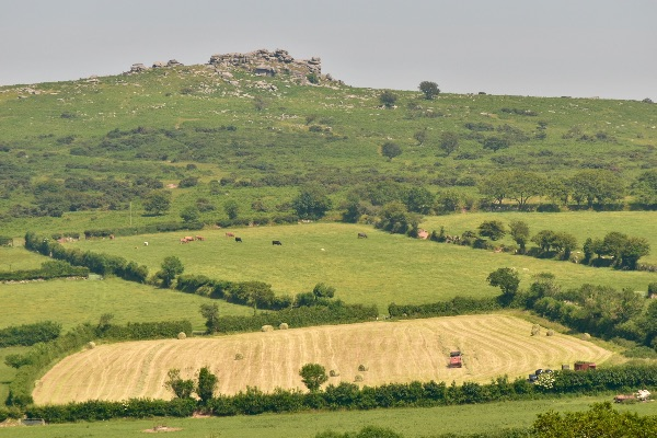 Pew tor and hay field June 2017