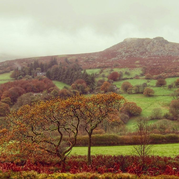 Dartmoor oaks and Sheepstor, November 2015.