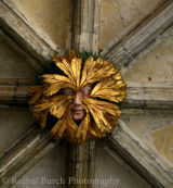 Green man boss at Norwich Cathedral