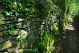 Dry stone wall along ancient trackway at Middlemoor Dartmoor