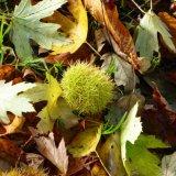 Autumn carpet October 2014