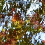 Autumn reflections, November 2014