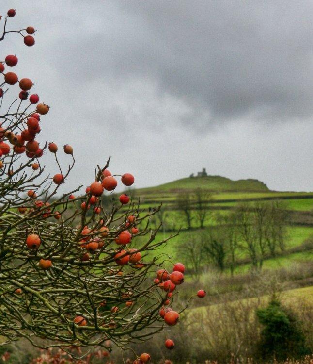 Winter berries and Brent Tor, Dartmoor December 2014.