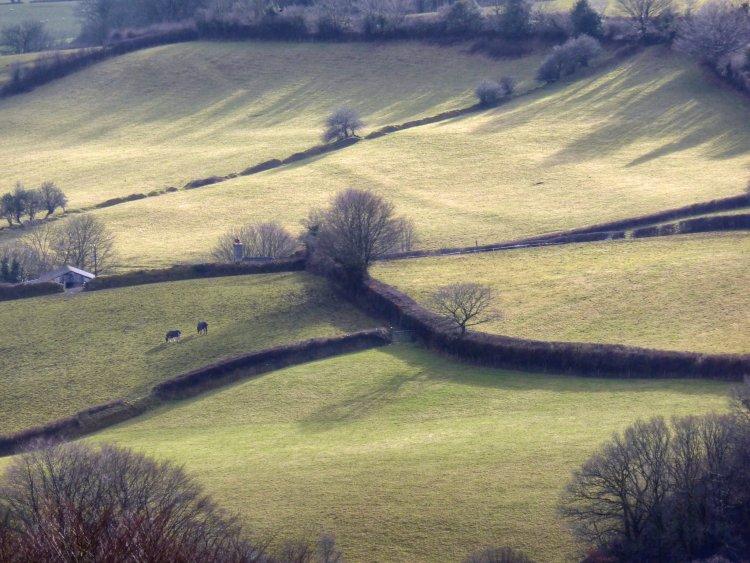 Light on fields near Mary Tavy Dartmoor, Feb 2015.