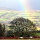Rainbow over Whitchurch Down, Dartmoor. January 2015.