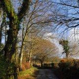 Lane at Moortown, Dartmoor Feb 2015.