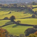 October fields near Mary Tavy, Dartmoor 2016.