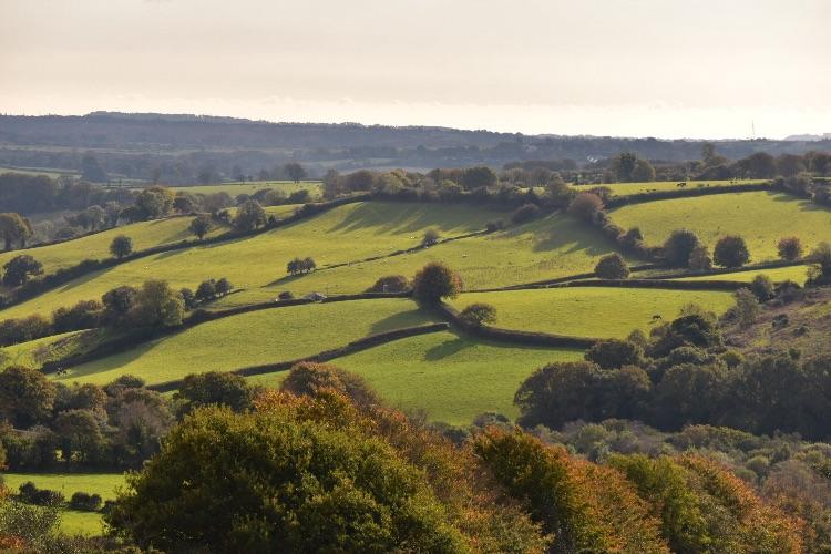 October landscape near Mary Tavy, October 2016.