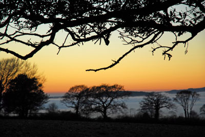 Misty Sunset And Trees Plasterdown