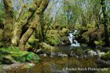 Peter Tavy Coombe Waterfall in May Dartmoor