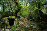 Box Well at Middlemoor in May Dartmoor