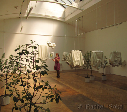 Living Echo exhibition, apple trees courtesy of the Forest of Avon Trust