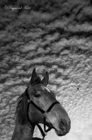Emilys' Horse
