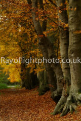 Autumn at Ashridge 2