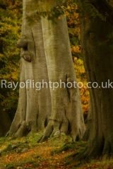 Autumn at Ashridge 4