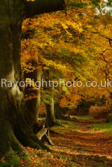 Autumn at Ashridge 3