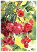 les groseilles rouges, redcurrants