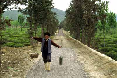 Water carrier, China