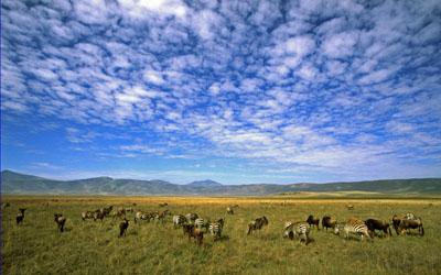 Life in caldera, Ngorongoro