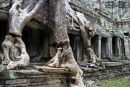 Temple of Ta Prohm, Angkor